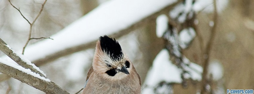 A Bird In Winter Facebook Cover Timeline Photo Banner For Fb