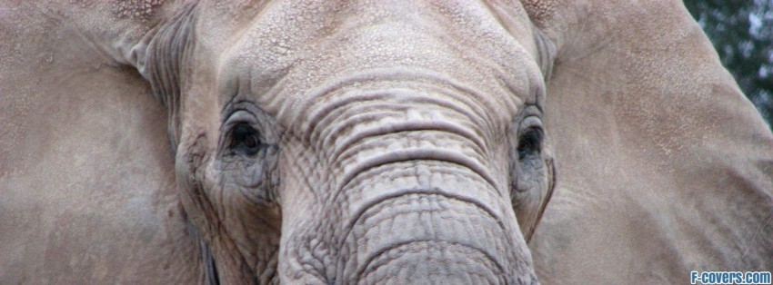 african elephant facebook cover timeline photo banner for fb