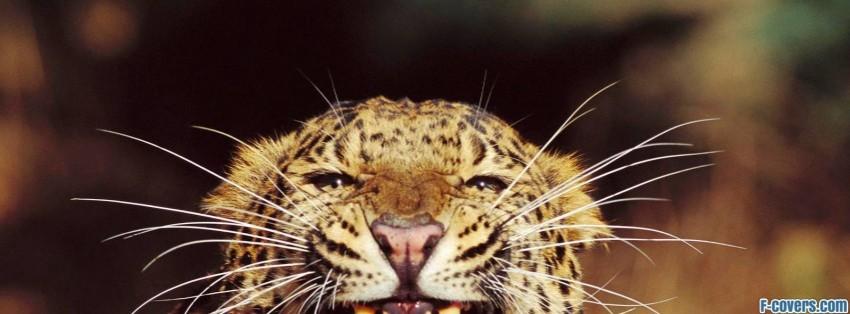 amur leopard facebook cover timeline photo banner for fb
