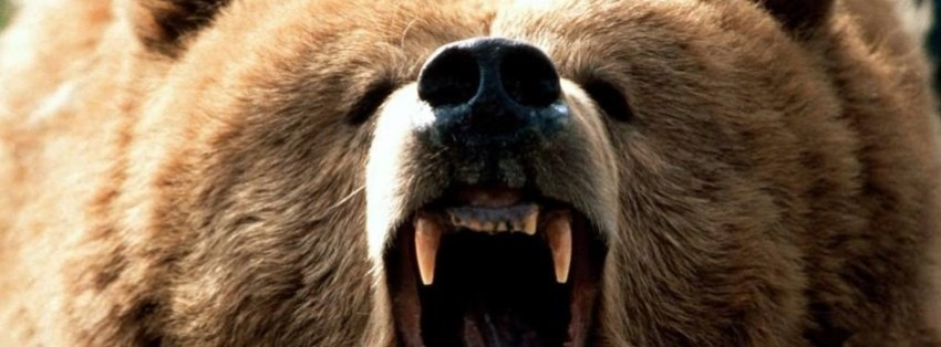 angry bear facebook cover