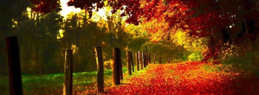 autumn alley Facebook Cover timeline photo banner for fb