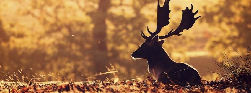 Autumn Deer Facebook Cover Timeline Photo Banner For Fb