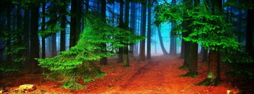 Autumn Forest Facebook Cover Timeline Photo Banner For Fb