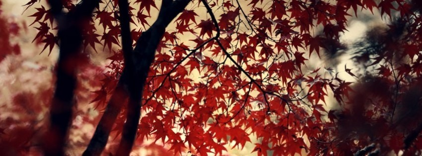 Autumn Leaves Background Facebook Cover Timeline Photo
