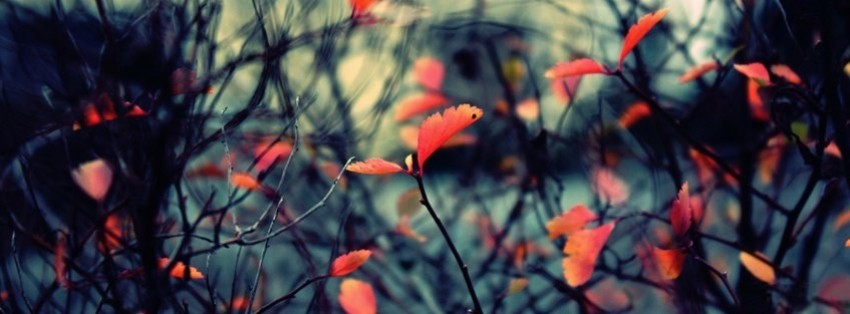 Autumn Leaves Background 4 Facebook Cover Timeline Photo