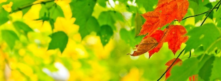autumn leaves background Facebook Cover timeline photo banner for fb