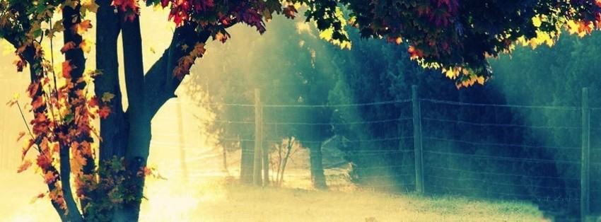 autumn trees facebook covers