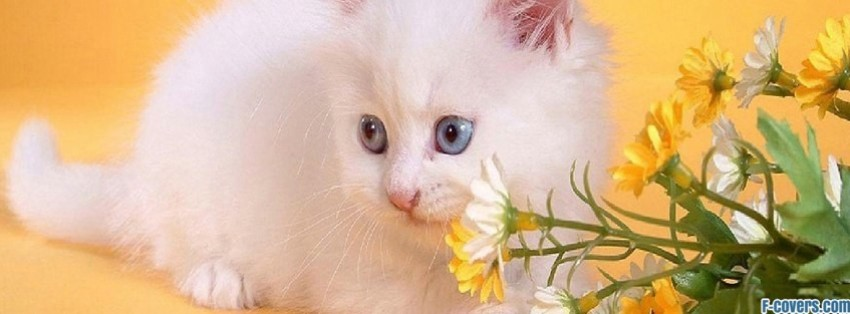 baby kitten facebook cover