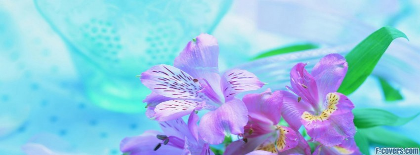 beautiful fresh flowers Facebook Cover timeline photo banner for fb