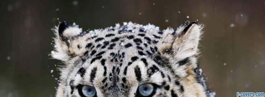 big cat Facebook Cover timeline photo banner for fb | 850 x 314 jpeg 72kB