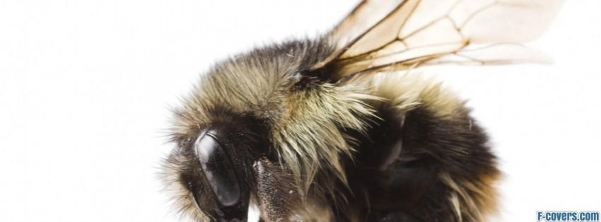 bumblebee facebook cover