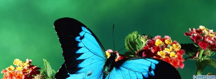 Butterfly Admirals Limenitis Facebook Cover Timeline Photo