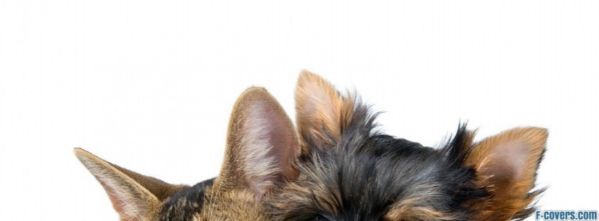Cat And Dog Friends Facebook Cover Timeline Photo Banner For Fb