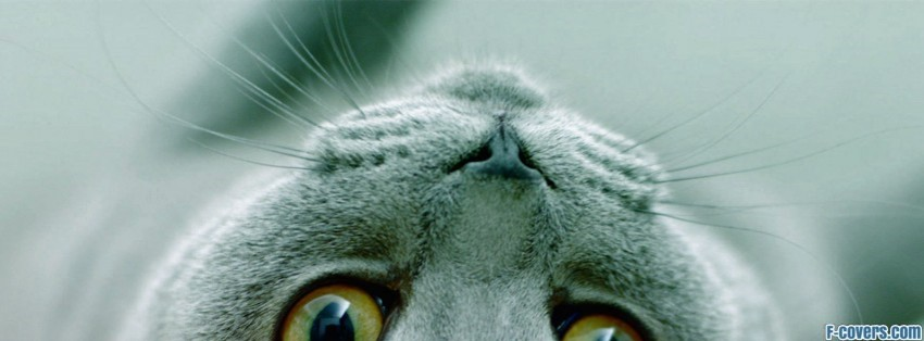 Cat Breeds Russian Blue Facebook Cover