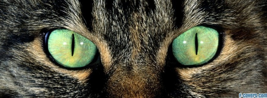 Cat Eyes Facebook Cover Timeline Photo Banner For Fb