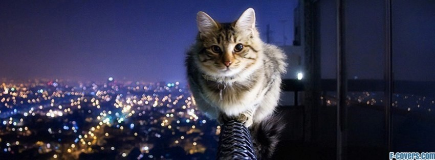 cat on a ledge facebook cover
