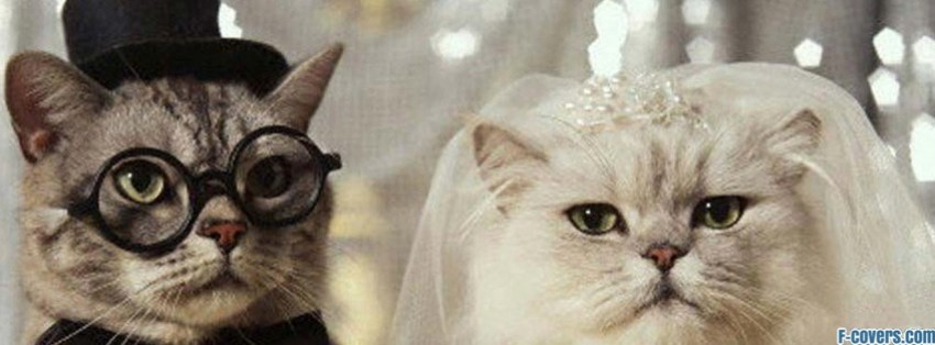 cats married facebook cover