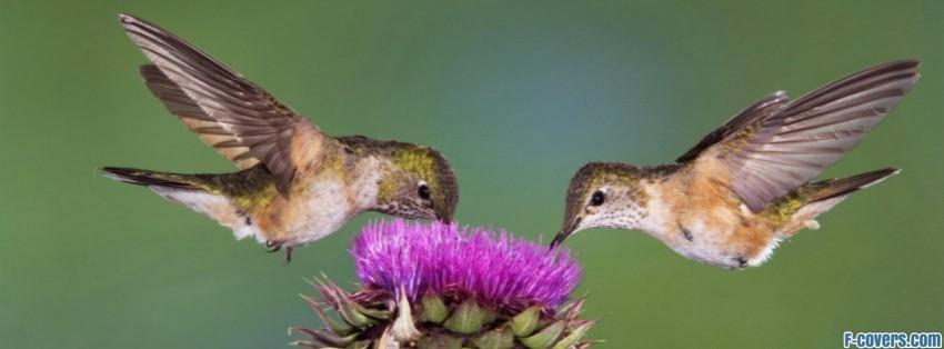 Hummingbird Facebook Cover Timeline Photo Banner For Fb