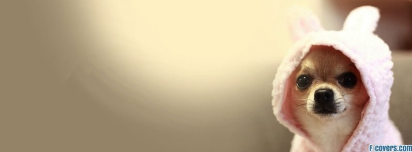 cute chihuahua dog in bunny costume facebook cover