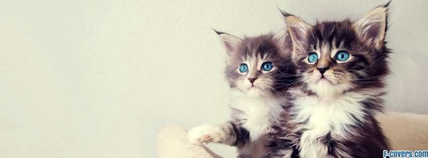 cute kittens facebook cover