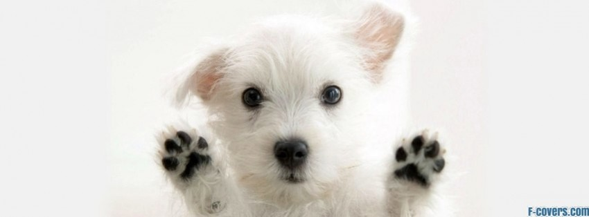 dog against glass facebook covers