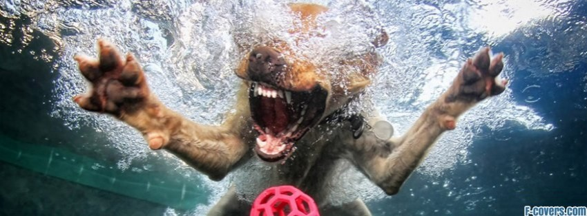 Dog Facebook Cover Photos Dog in Water Facebook Cover