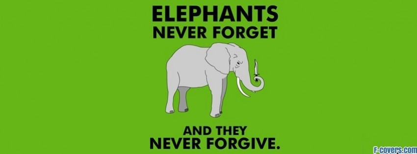 elephant funny wallpaper facebook cover timeline photo