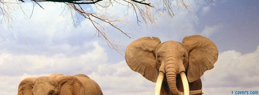 family indian elephant facebook cover timeline photo