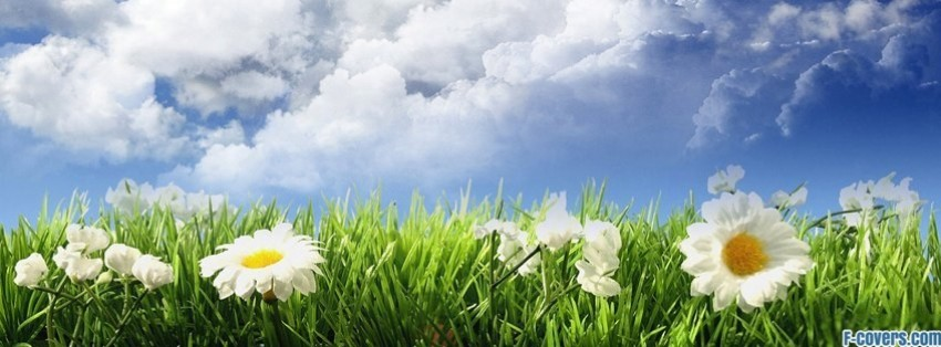 field sky flowers facebook cover