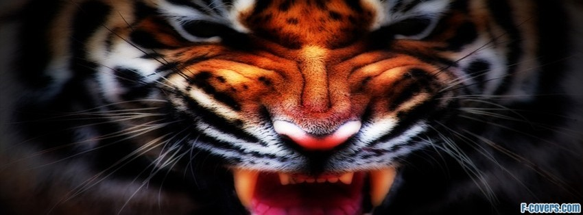 fierce tiger facebook cover