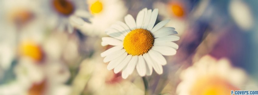 flowers daisy Facebook Cover timeline photo banner for fb