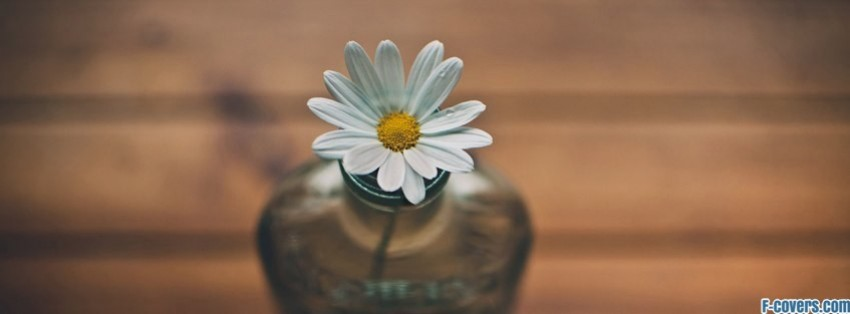 Flowers Daisy Vase Facebook Cover Timeline Photo Banner For Fb