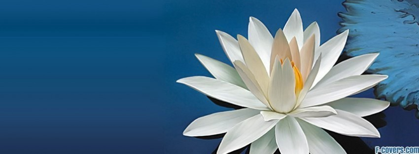 lotus facebook cover, Beautiful flower