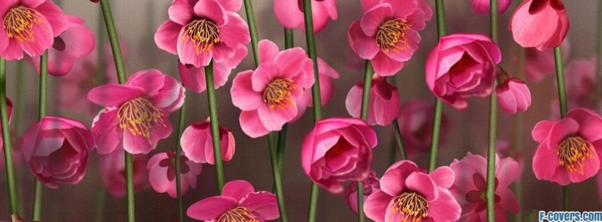 Flowers Nature 15 Facebook Cover