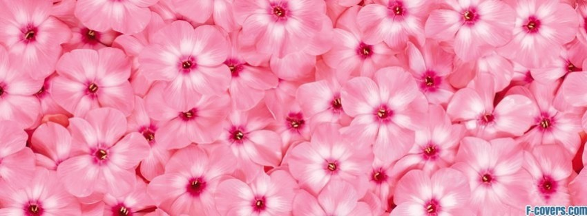flowers pink 27 Facebook Cover timeline photo banner for fb