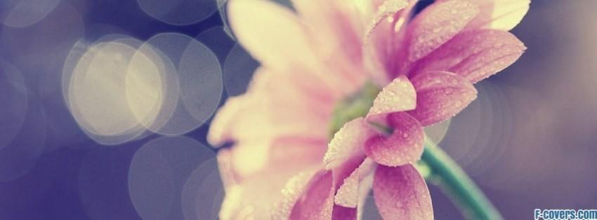 Pink Flower Cover Photos For Facebook Timeline Flowers Pink 28 ...