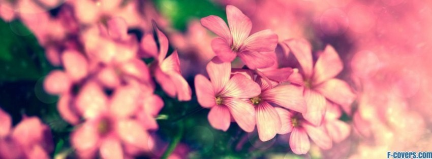 Cover Photos For Facebook Timeline About Flowers | www ...