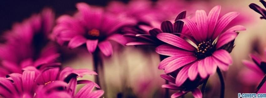flowers-pink-5-facebook-cover-timeline-banner-for-fb.jpg