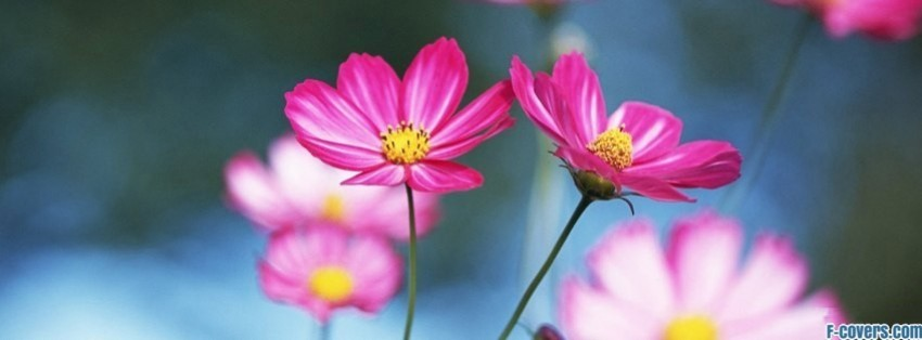 Facebook cover flower