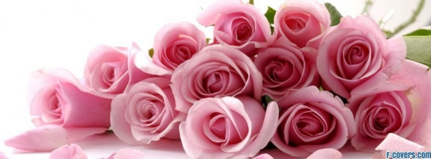 flowers pink roses 3 facebook cover