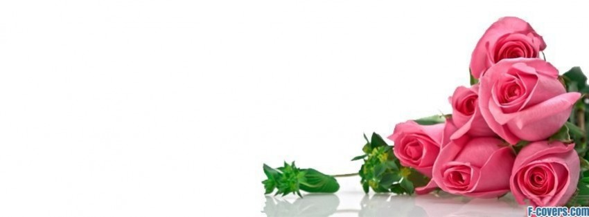 flowers pink roses 4 Facebook Cover timeline photo banner for fb