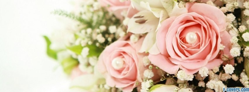 Pink Rose Flowers Facebook Timeline Cover Picture Image Free