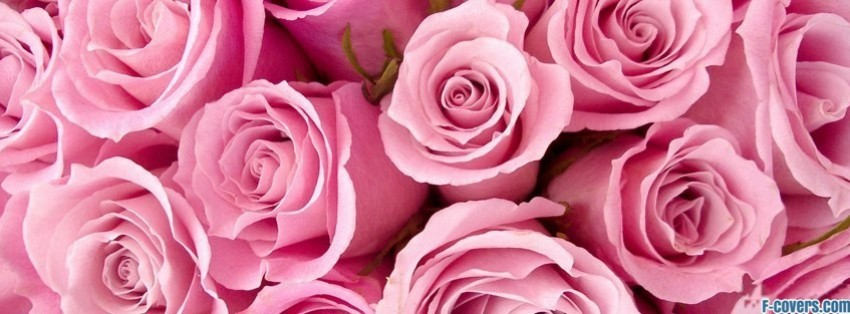 flowers-pink-roses-facebook-cover-timeline-banner-for-fb.jpg
