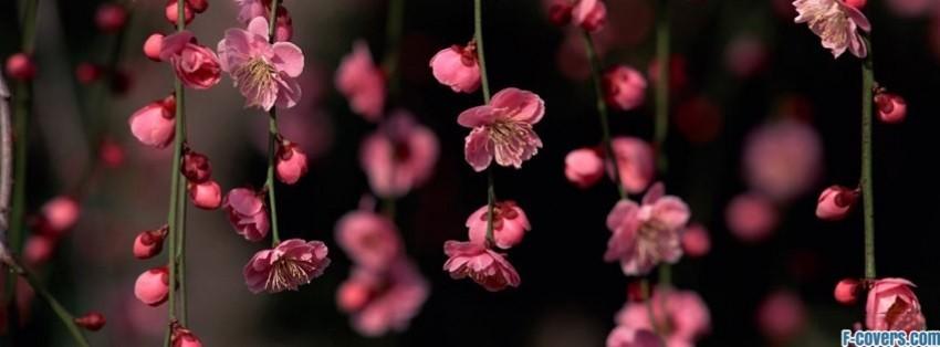Flowers pink spring facebook cover timeline photo banner for fb flowers pink spring facebook cover mightylinksfo