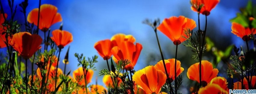 Orange poppy flower 757328 sciencemadesimplefo this page contains information about orange poppy flower mightylinksfo Choice Image