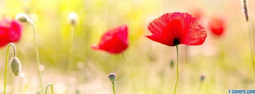 flowers poppy red 10 facebook cover