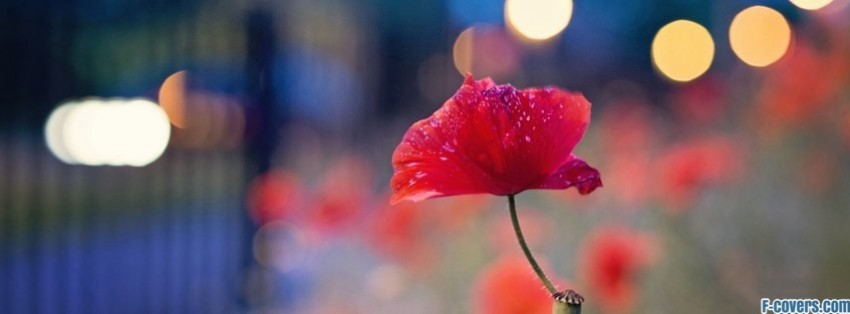flowers poppy red 11 facebook cover
