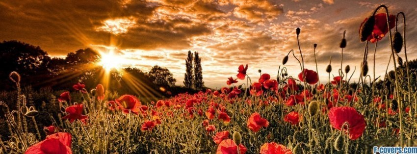 flowers poppy red 15 facebook cover