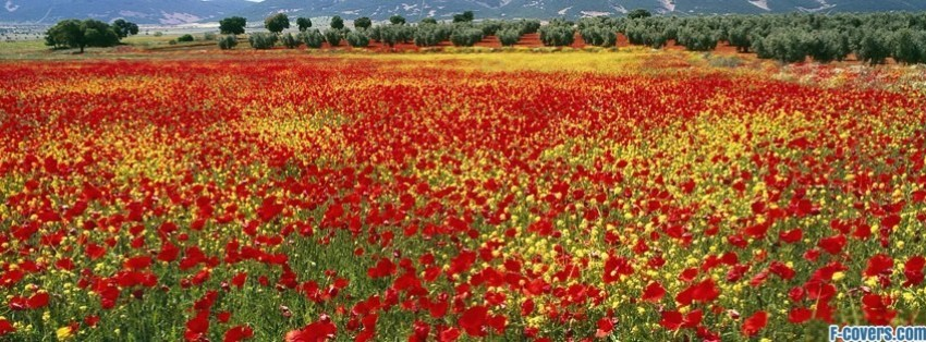 flowers poppy red 16 facebook cover