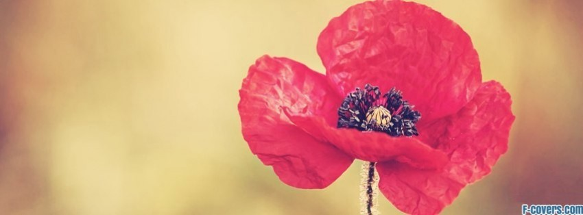 flowers poppy red 18 facebook cover